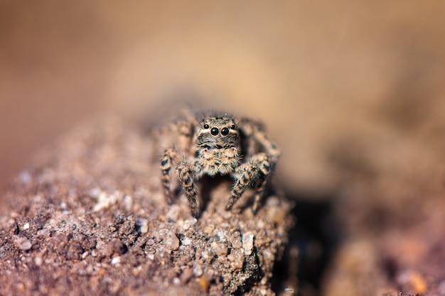 Малый скача паук в саде, конец вверх.