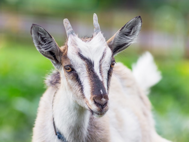 A small kid with horns on a green blurry background