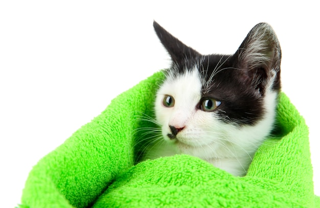 Small kitten in green towel isolated on white