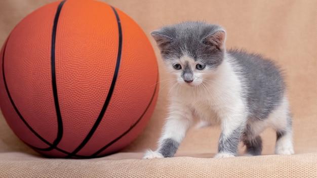バスケットボールの近くの小さな子猫。スポーツ活動。