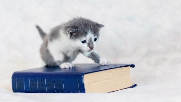 厚い本の近くの小さな子猫。子猫は本を開きたいと思っています。