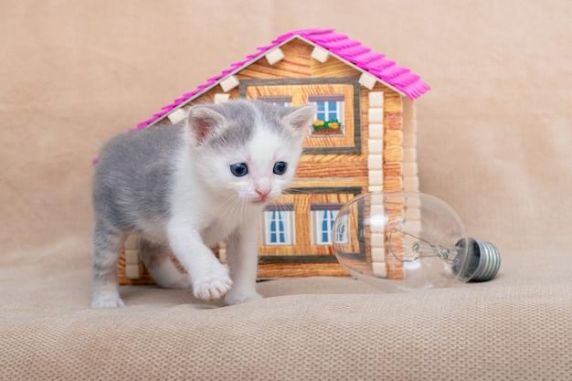おもちゃの家と電球の近くの小さな子猫