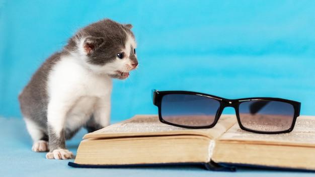 開いた本と眼鏡の近くの小さな子猫。読むことを学ぶ。