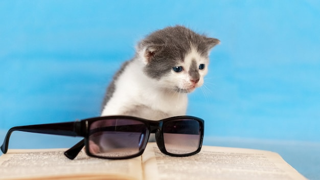 開いた本とゴーグルの近くの小さな子猫
