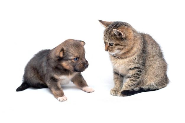 白い孤立した背景、かわいい動物の上の小さな子犬の横にある小さな子猫