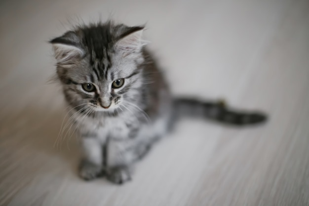 Small kitten sits on floor. view from above