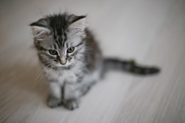 小さな子猫は床に座っています。上からの眺め