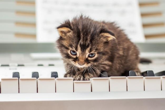 Маленькая кошечка сидит на клавишах пианино
