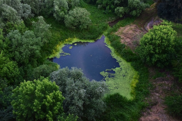 A small lake overgrown with green trees and grass. photographed from a bird's eye view