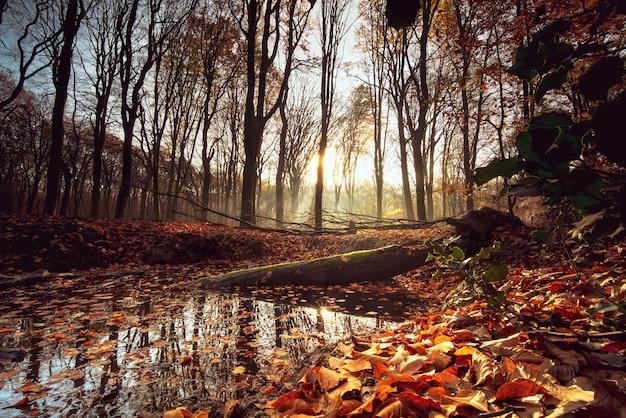秋の森の中、日光の下で葉や木々に囲まれた小さな湖