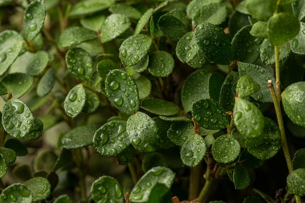 小葉熱帯マクロ