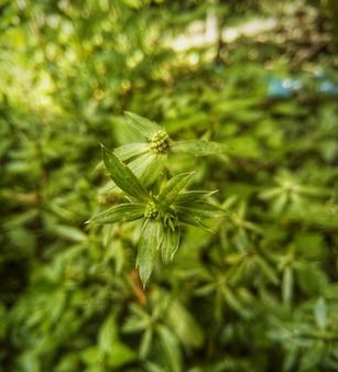 꽃 무료 사진과 함께 작은 잎