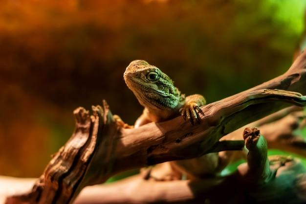 나뭇가지에 클로즈업된 작은 도마뱀, 혼합 색상