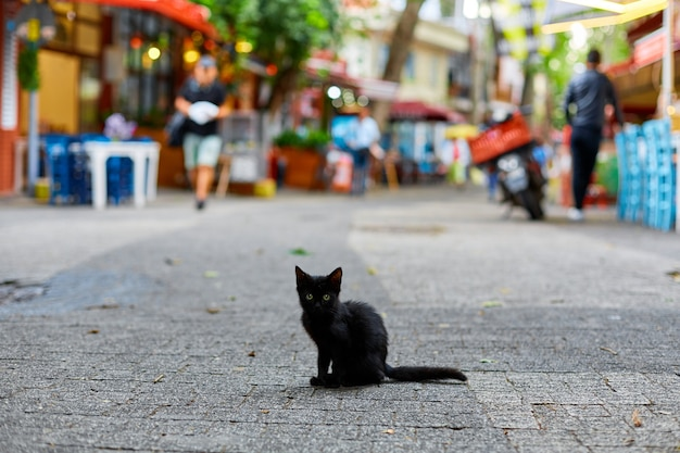 A small lonely black kitten sits in the middle of the street
