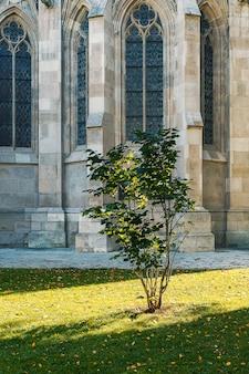 Небольшое одинокое дерево, освещенное солнцем перед готическим фасадом знаменитой церкви votivkirche в вене, австрия