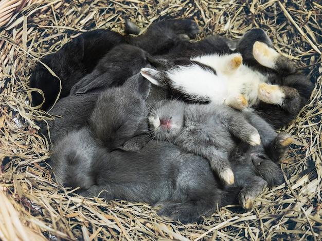 작은 사랑스러운 작은 현지 태국 토끼