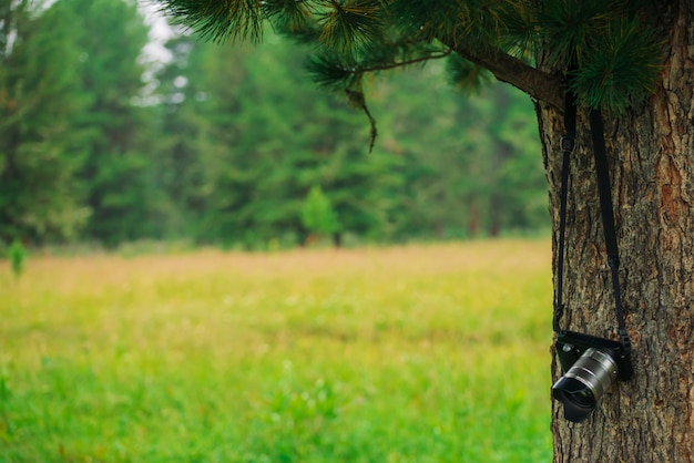 Small mirrorless digital photo camera is hanging on branch of coniferous tree