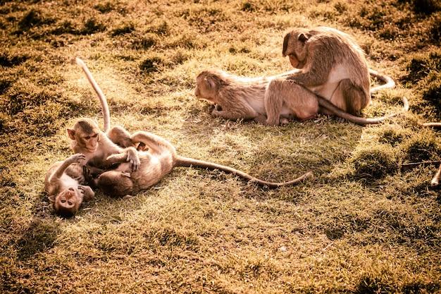 一緒に芝生で遊ぶ小猿愛らしいかわいい動物
