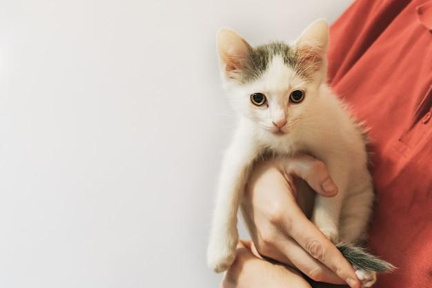 Маленький месячный белый беспородный котенок на руках у женщины в красной футболке с копией пространства