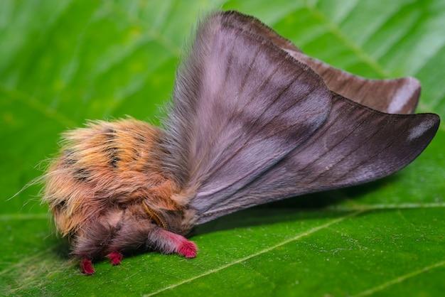 Маленькая бабочка на листе в оборонительной позиции 1