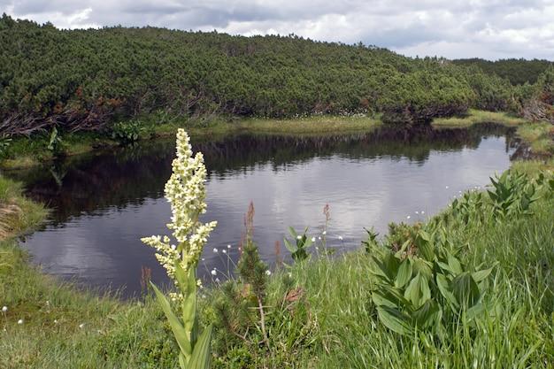 Небольшой горный бассейн на плато и цветок впереди