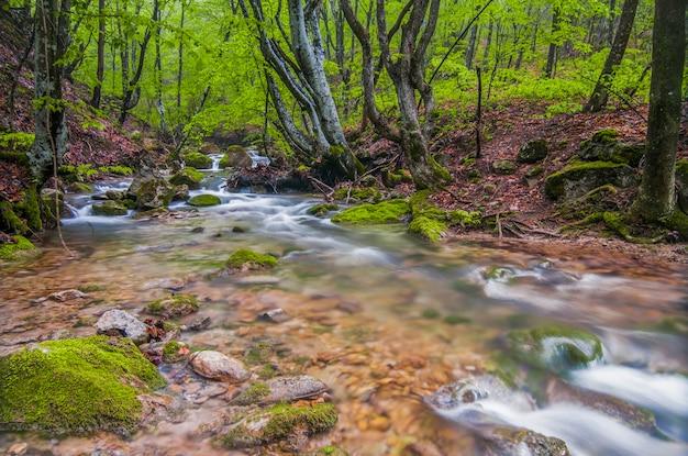小さな山の滝が苔むした石の上を流れ、霧に覆われています