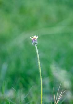 小さな多色の小さな野生の花は、柔らかい緑のボケ味の背景でクローズアップ