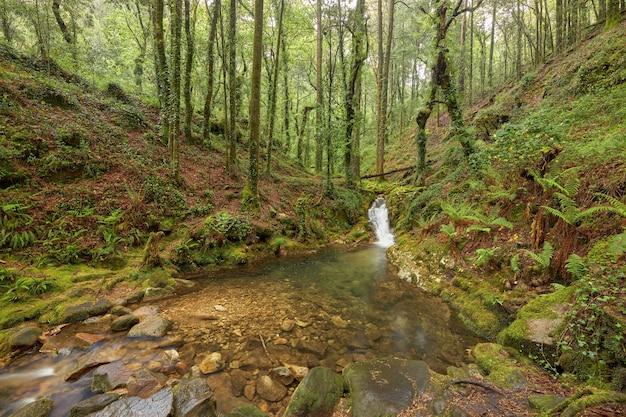 스페인 갈리시아 지역의 아름다운 숲에 있는 강에 의해 형성된 작은 자연 수영장.