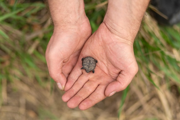 A small newborn turtle sits in the arms of a male fisherman who saved her