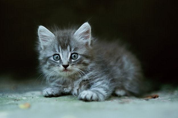 Small nice fluffy kitten