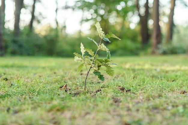 夏の森に植えたばかりの小さな樫の苗木。自然にやさしいコンセプト。
