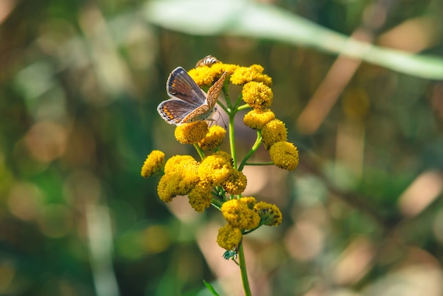 Small orange butterfly on yellow wild flower with copy space on bokeh.