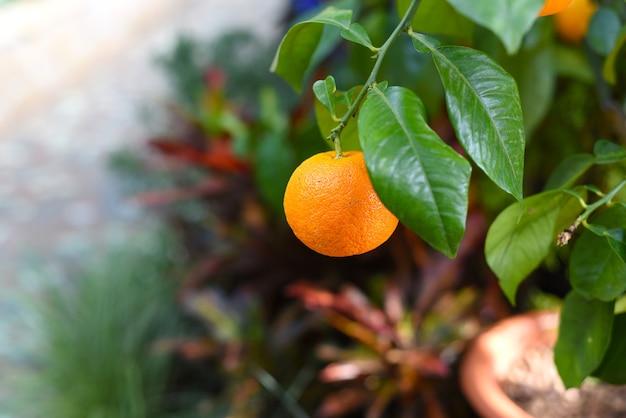 木に生えている小さなオレンジ色の果実