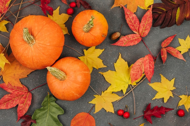 Small orange pumpkins and autumn maple leaves on a dark gray background