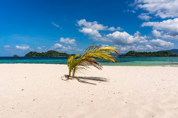 Small palm tree on beach against the sea
