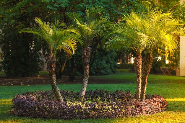 Small palm trees on a green lawn lit by bright sunshine