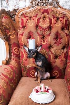Празднование дня рождения маленького питомца. торт для щенка в бумажной короне