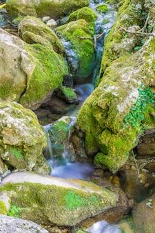 小さな絵のような川が森の石の間を流れています。