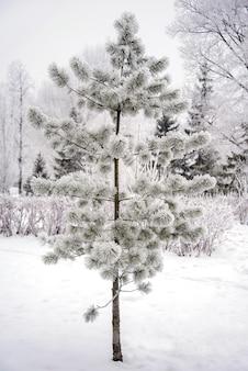 雪に覆われた枝を持つ小さな松