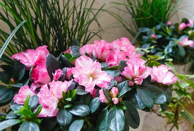 작은 분홍색 진달래 멋진 여름 꽃 식물