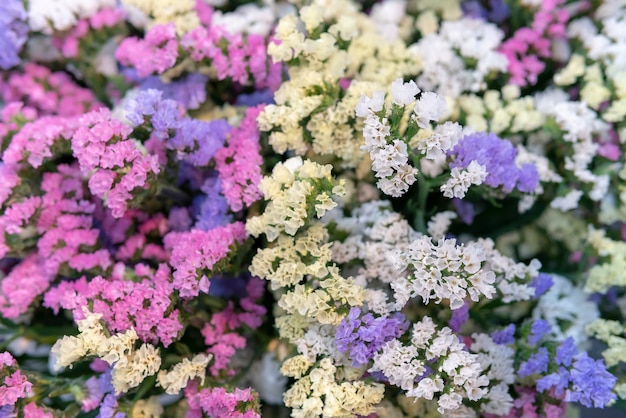 Small pink and blue flowers. paniculata flamingo