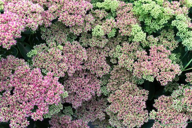 夏の小さなピンクの花の背景、クローズアップ