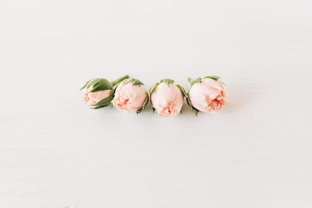 つぼみの小さなピンクのバラ。ミニマリストの構成、シンプルな白い背景。コピースペース。おめでとうとお祝いのコンセプト。