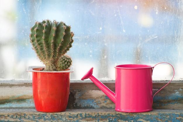 小さなピンクのじょうろと古い窓のサボテン