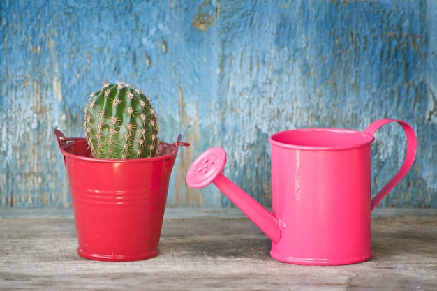 Small pink watering can and cactus. blue vintage background