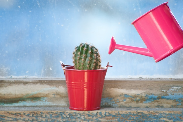 Small pink watering can and cactus on the old window