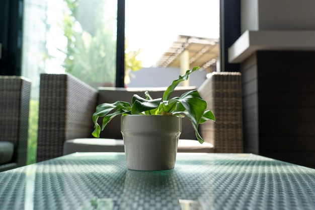 Small plant in a ceramic cup for decoration.