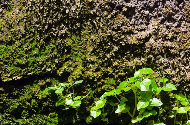 Small plant, green moss on stone wall background.