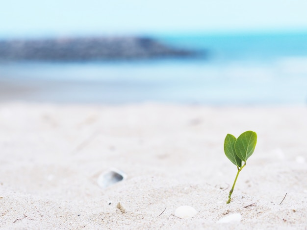 Small plant grow with leaf heart shape on the beach.