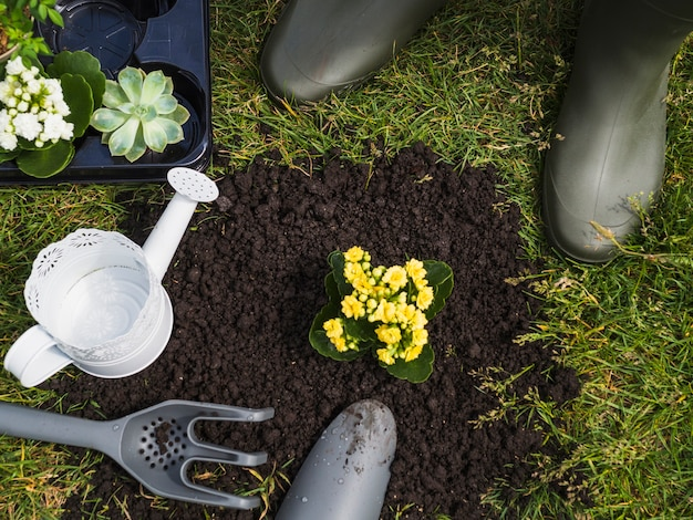 Малое растениеводство в почве